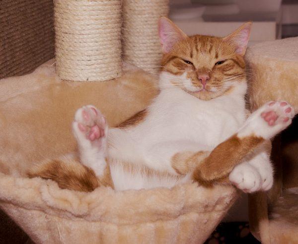 Katzenbedarf und Kratzbaum