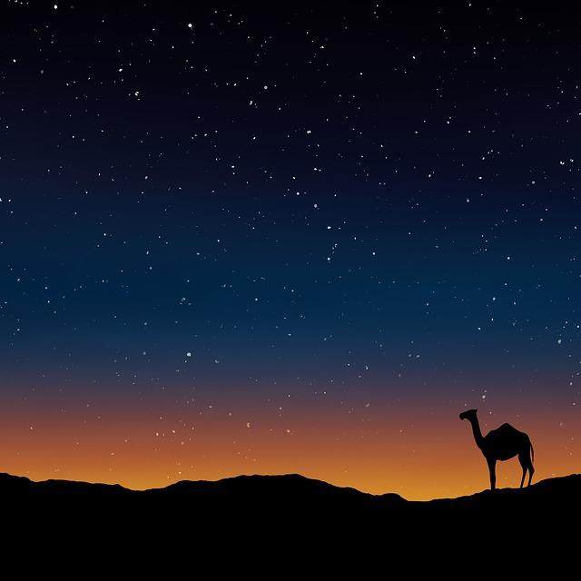 afrika kamele
